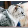 志村動物園の猫グレ子がルドルフとイッパイアッテナに登場?[かわいい画像あり]