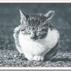 野良猫の年齢の調べ方や見分け方は?子猫の年齢を知る方法?