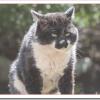 野良猫に餌やりは法律で禁止?迷惑行為で警察に通報?