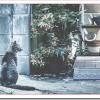 捨て猫を拾ったらどうする?飼えない時は保健所や里親募集?