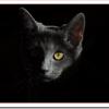 野良猫の駆除を保健所に頼む?糞、おしっこの被害対策や地域猫活動?